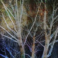 Buy canvas prints of Seeing Moon Texture by Florin Birjoveanu