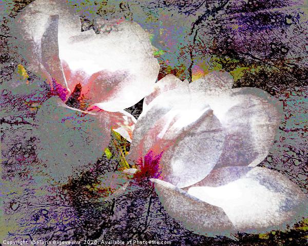 Double White Saturation Canvas Print by Florin Birjoveanu