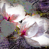 Buy canvas prints of Double White Saturation by Florin Birjoveanu