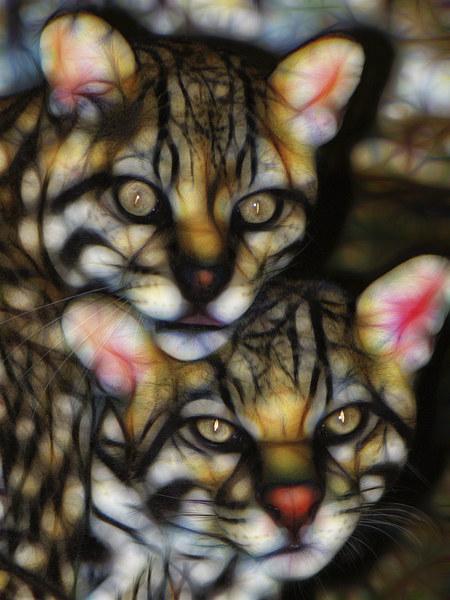 Jaguar Mixed Media Wall Art Canvas print by Tanya Hall