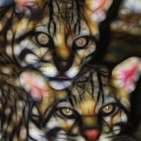 Buy canvas prints of  Jaguar Mixed Media Wall Art by Tanya Hall