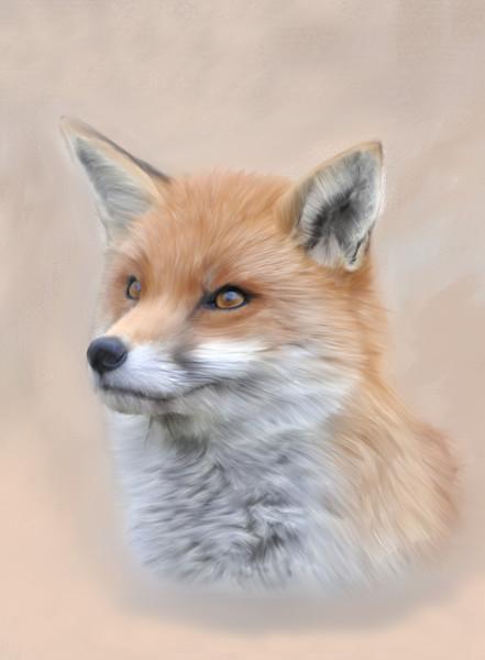 Fox, Siona The Wild Fox Canvas print by Tanya Hall