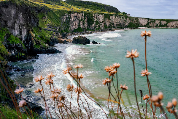 The White Cliffs, North Antrim Coast Canvas print by Alan Campbell