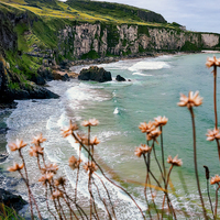 Buy canvas prints of The White Cliffs, North Antrim Coast by Alan Campbell