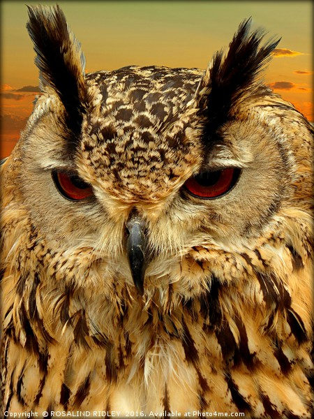 """""""LONG EARED OWL"""" Canvas print by ROSALIND RIDLEY"""
