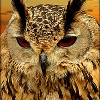 """Buy canvas prints of """"LONG EARED OWL"""" by ROSALIND RIDLEY"""
