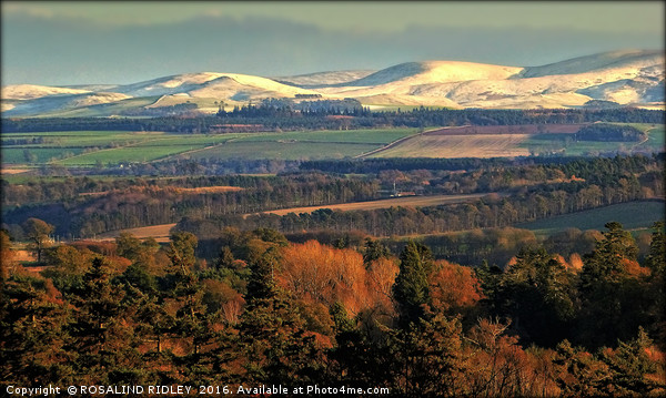 """""""EVENING LIGHT ON THE SNOW TOPPED CHEVIOTS"""" Canvas print by ROSALIND RIDLEY"""