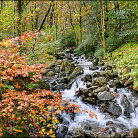 "Buy canvas prints of ""Autumn leaves at the Waterfall"" by ROSALIND RIDLEY"