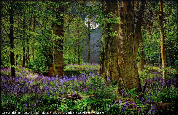 """""""Moonlit Bluebell woods"""" Canvas print by ROSALIND RIDLEY"""