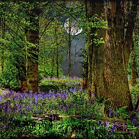 """Buy canvas prints of """"Moonlit Bluebell woods"""" by ROSALIND RIDLEY"""