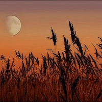 Buy canvas prints of Moon over Reeds by ROSALIND RIDLEY