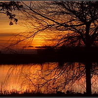 """Buy canvas prints of """"Sunset through the trees"""" by ROSALIND RIDLEY"""