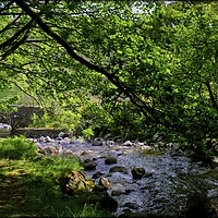"""Buy canvas prints of """"Dappled sunshine at the stream !"""" by ROSALIND RIDLEY"""
