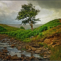 "Buy canvas prints of ""Storm clouds gather at Bollihope"" by ROSALIND RIDLEY"