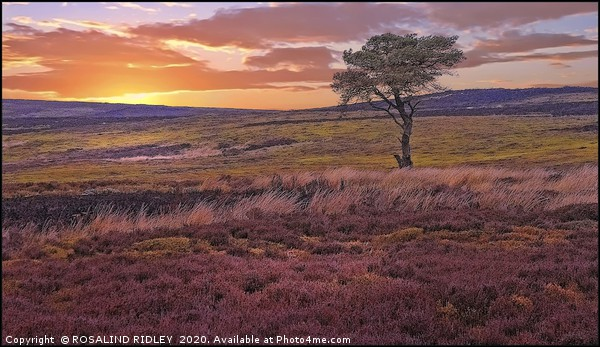 """""""Sunset across the moors"""" Canvas Print by ROSALIND RIDLEY"""
