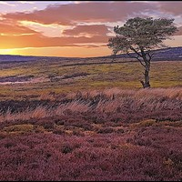 """Buy canvas prints of """"Sunset across the moors"""" by ROSALIND RIDLEY"""