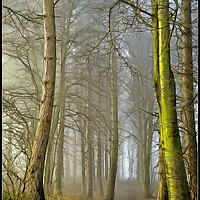 "Buy canvas prints of ""Portrait of a foggy wood"" by ROSALIND RIDLEY"