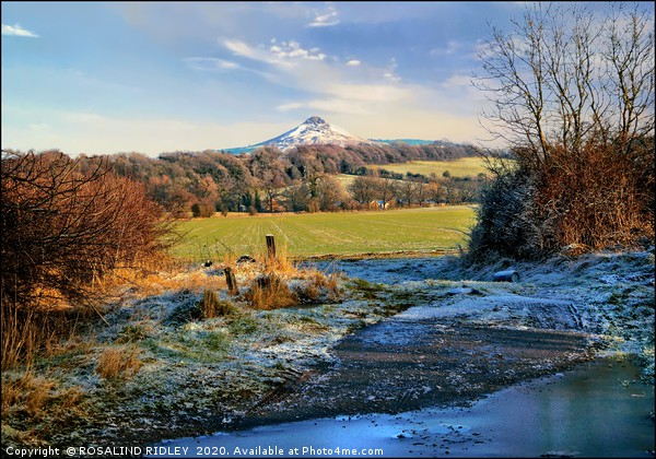 """Snowcapped Roseberry"" Canvas print by ROSALIND RIDLEY"