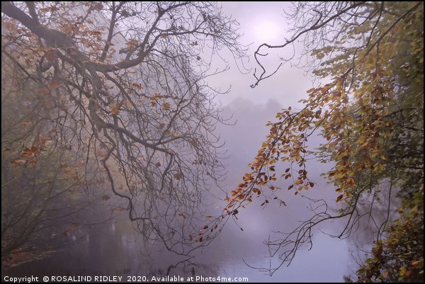 """""""Aujtumn leaves by a foggy lake"""" Canvas print by ROSALIND RIDLEY"""