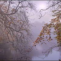 """Buy canvas prints of """"Aujtumn leaves by a foggy lake"""" by ROSALIND RIDLEY"""