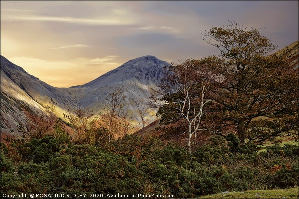 """""""Trees at Great Gable""""2 Canvas print by ROSALIND RIDLEY"""