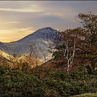 """Buy canvas prints of """"Trees at Great Gable""""2 by ROSALIND RIDLEY"""