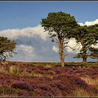 """Buy canvas prints of """"Trees on the moors"""" by ROSALIND RIDLEY"""