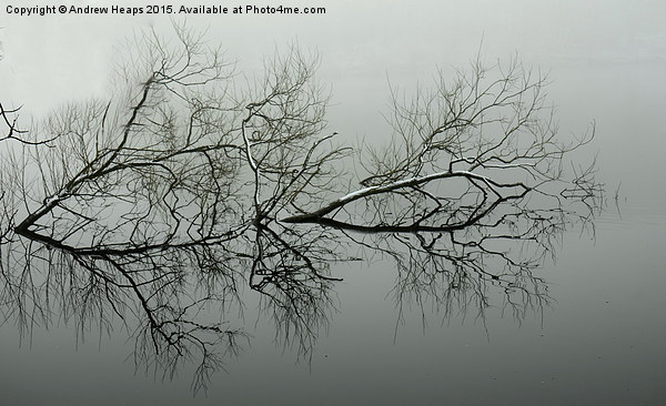 Reflection of tree. Framed Print by Andrew Heaps