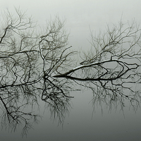 Buy canvas prints of  Reflection of tree. by Andrew Heaps