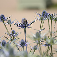 Buy canvas prints of Thistle flower by Andrew Heaps