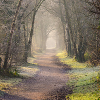 Buy canvas prints of Tunnel of trees along Biddulph disused railway tra by Andrew Heaps