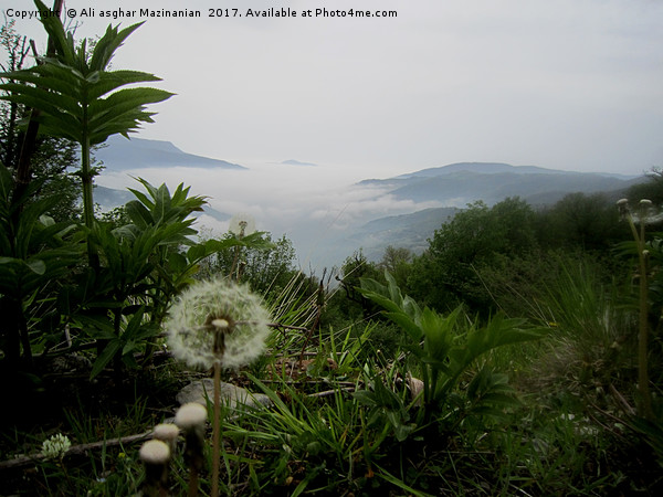 A nice view of fog in  in jungle 2, Framed Mounted Print by Ali asghar Mazinanian
