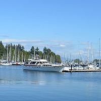 Buy canvas prints of A nice place in Stanley Park,Canada, by Ali asghar Mazinanian