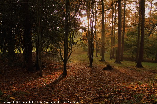 Autumn Woodland Framed Mounted Print by Simon Hall