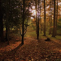 Buy canvas prints of Autumn Woodland by Simon Hall