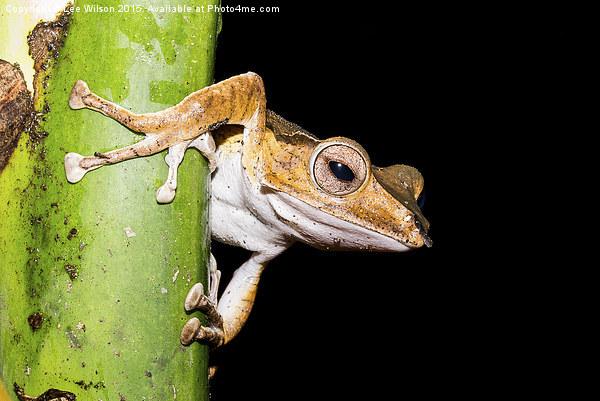 Tree Frog Canvas print by Lee Wilson