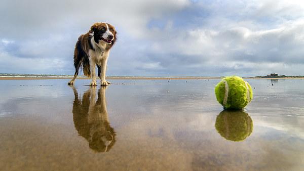 Dog v Ball Canvas print by Alan Simpson