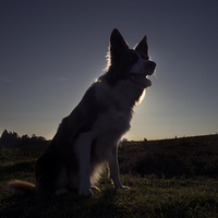 Buy canvas prints of  Moon Dog by Alan Simpson
