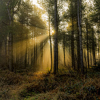 Buy canvas prints of Sunrise - Grimston Woods by Alan Simpson