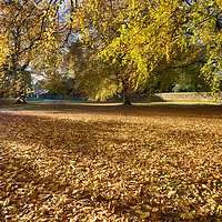 Buy canvas prints of Autumn Leaves by Alan Simpson
