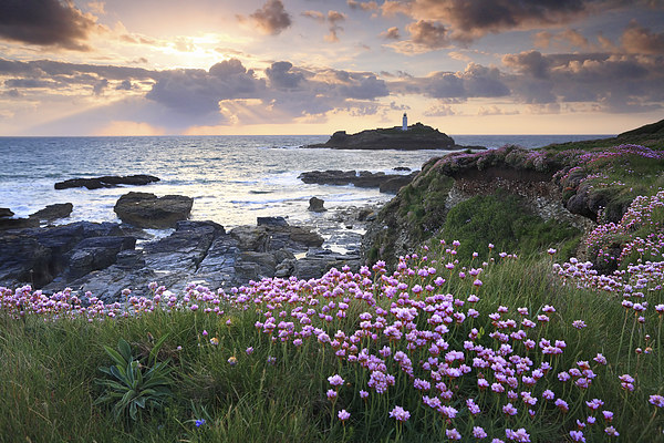 Thrift at Sunset (Godrevy).tif Canvas print by Andrew Ray