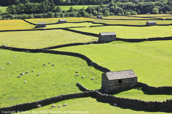 Barns at Gunnerside Canvas print by Andrew Ray