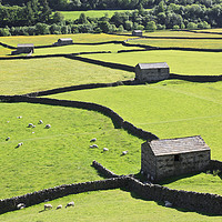 Buy canvas prints of Barns at Gunnerside by Andrew Ray