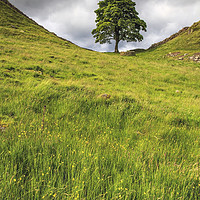 Buy canvas prints of Sycamore Gap by Andrew Ray