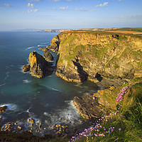 Buy canvas prints of Thrift at Hells Mouth by Andrew Ray