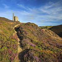 Buy canvas prints of Heather at Tywarnhayle by Andrew Ray
