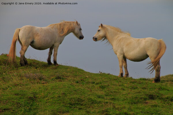 A couple of horses standing on top of a lush green Canvas Print by Jane Emery