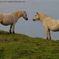 Buy canvas prints of A couple of horses standing on top of a lush green by Jane Emery