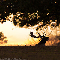Buy canvas prints of Call of the deer  by Louise Wilden