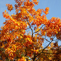 Buy canvas prints of Autumnal colours by Stephen Read